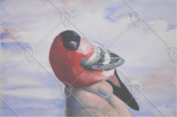 Süvöltő - kis madár, nagy barátság II