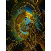 Medúza-fűz